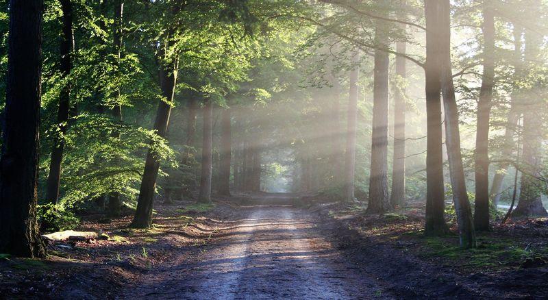 Bilde av en skogsvei