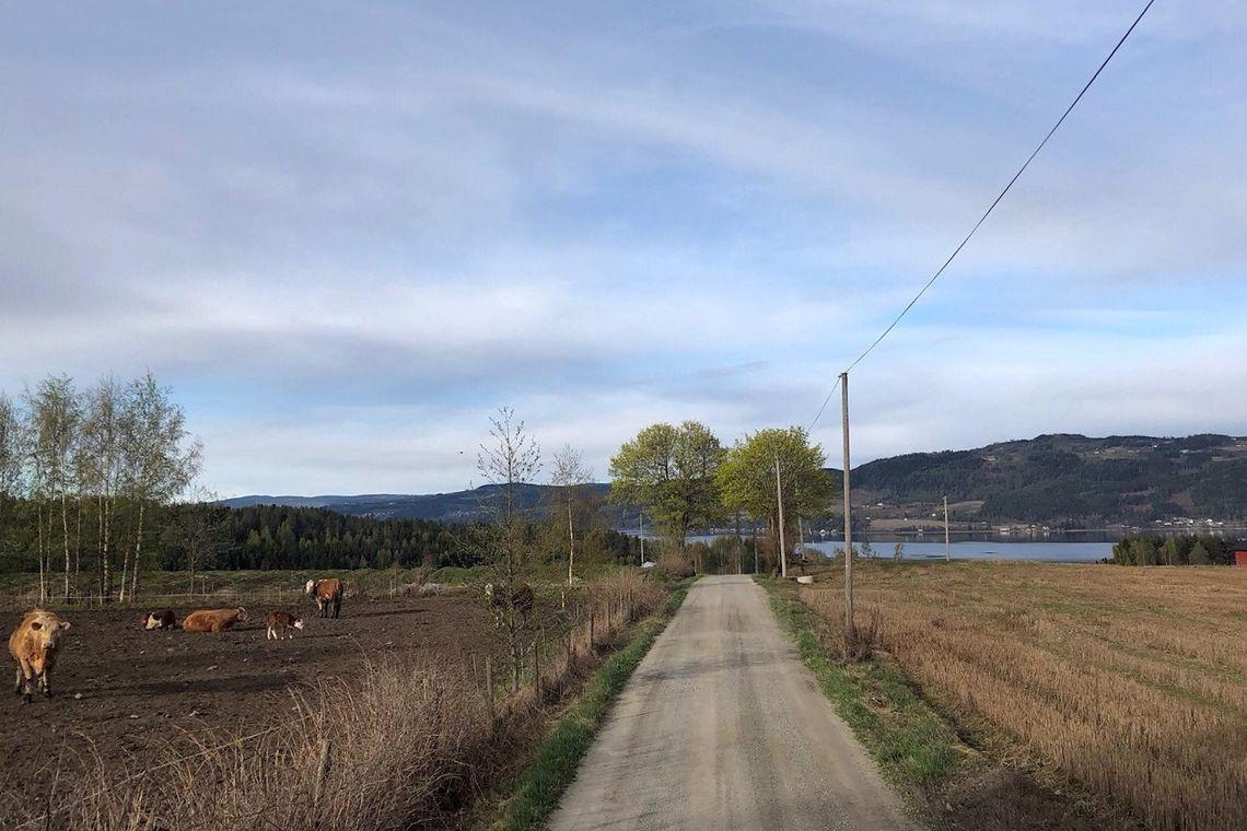 Fra løypa til Reidar Berges æresløp med utsikt over Mjøsa. (Foto fra løpets facebookside)