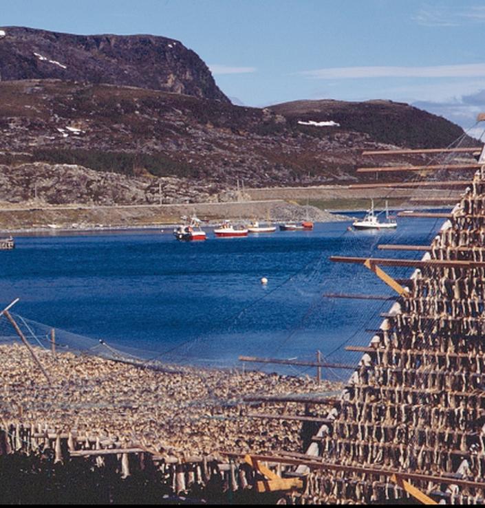 Porsangerfjorden fisk på hjell
