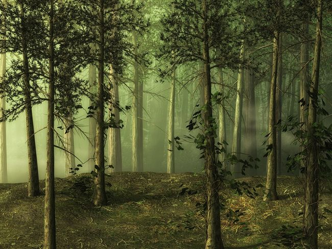 forest-1699078_960_720