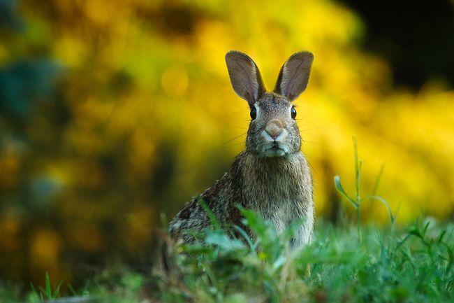 rabbit-1882699_960_720