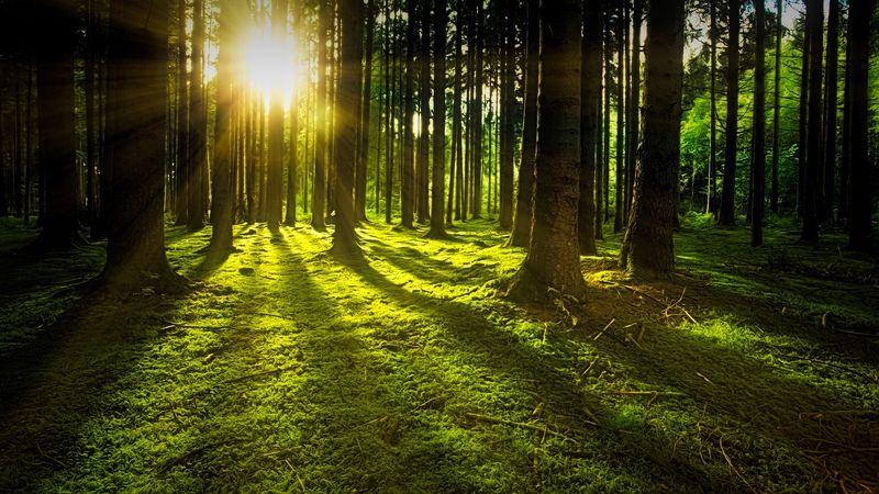 Illustrasjonsbilde tatt i en skog