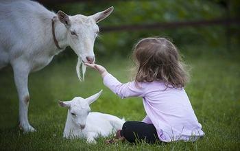 barn med geiter