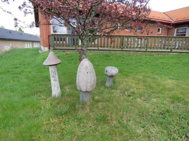 Soppene-ved-Rakkestad-Dagsenter_Rakkestad_kommune.jpg