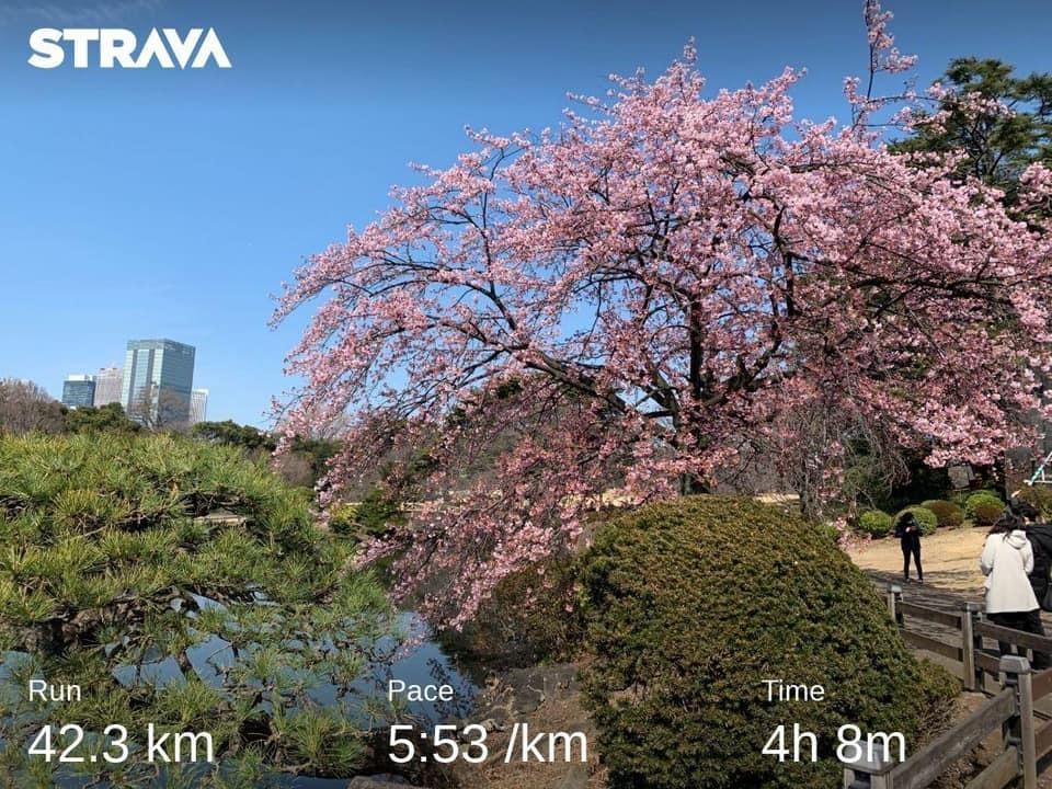 Kirsebærtre_TokyoMarathon.jpg
