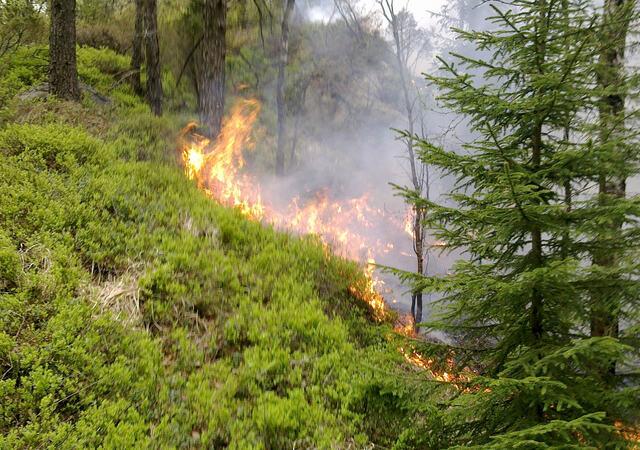 skogbrann2011