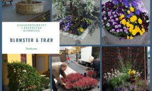 Blomster_trær_i_sentrum_Signalprosjektet_Rakkestad_kommune[1].png