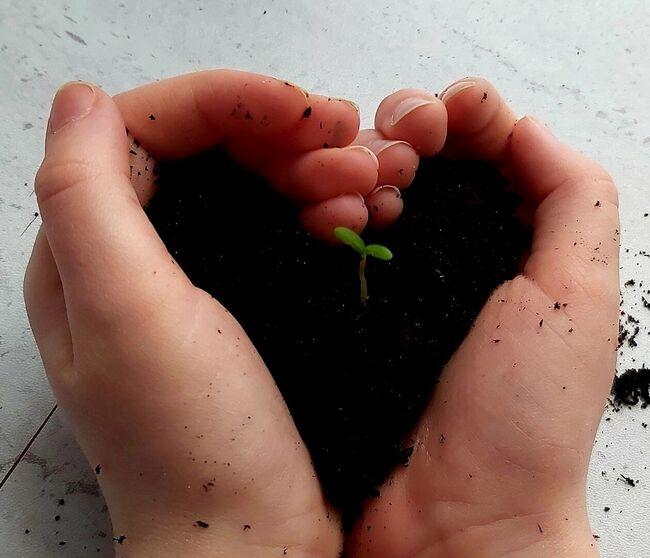 Hjerte av jord med spire, Mille Husdal Rønning, 7 år, Orkanger