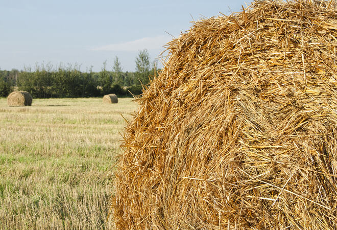 stack of hay on the field on a background of green forest and sk