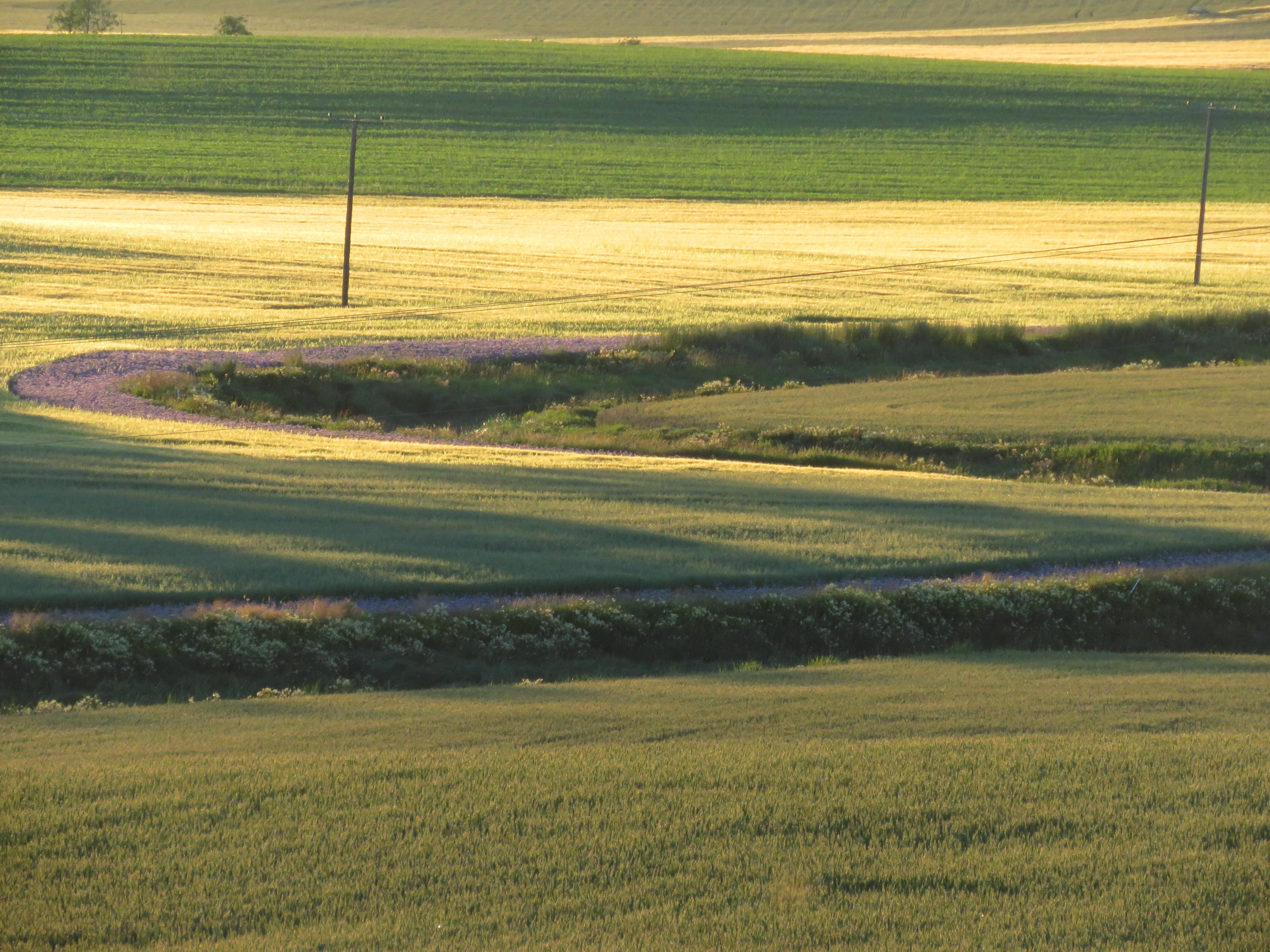 Honninurt miljøtiltak jordbruk[ 1].JPG