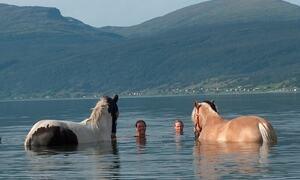 Hester bader i havet ©Frid S Johansen