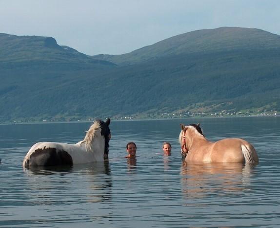 Hester bader i havet