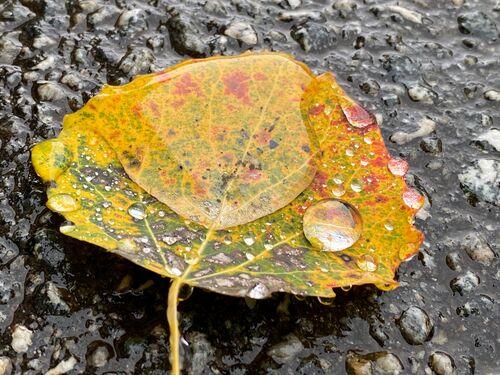 Haustfarga blad med vatn på.