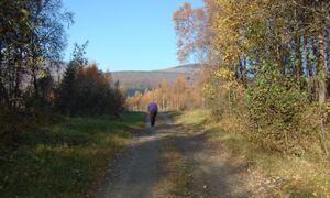 Dame som går i skogen ©Evy Hansen