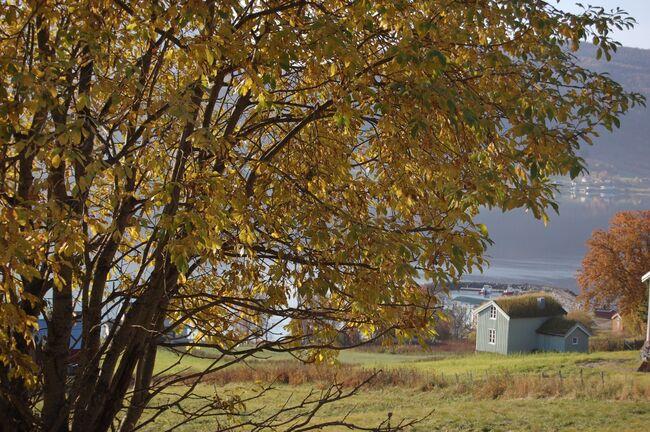 Gammelt hus ©Evy Hansen