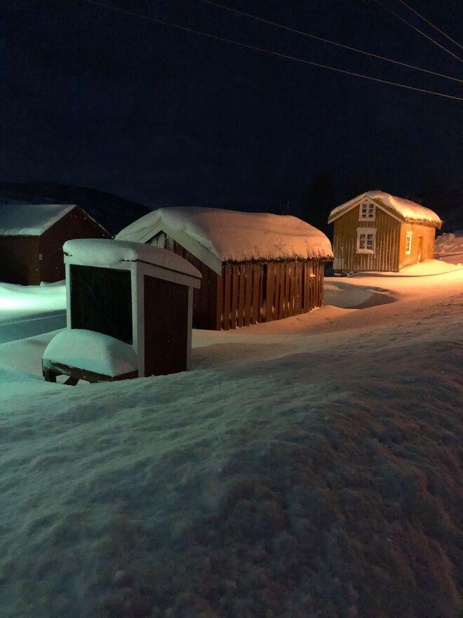 Melkerampe med snø ©Evy Hansen