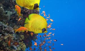 Et hav av muligheter - innsamlingsaksjon WWF 2020 -