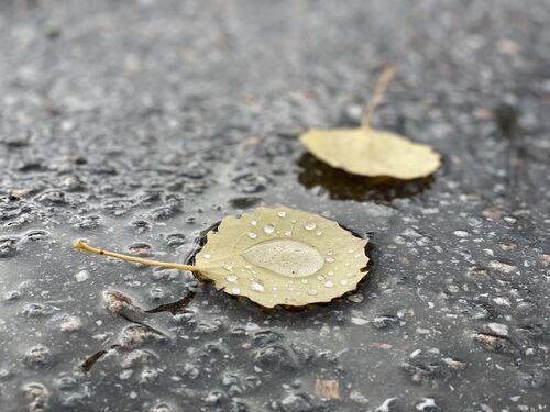 To gule blad med regndropar på våt asfalt.