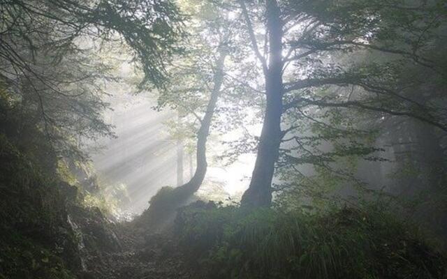 Morgen skog