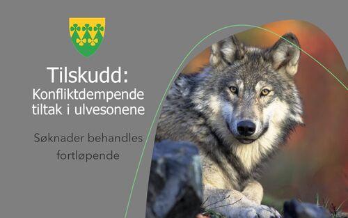 Tilskudd - konfliktdempende tiltak i ulvesoner - Rakkestad kommune