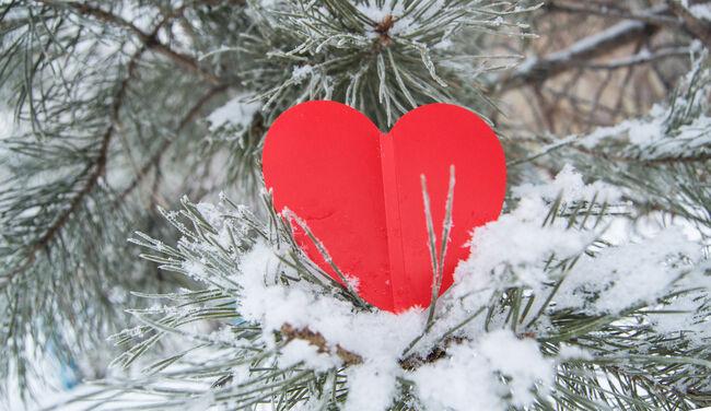 Bilde av hjerte i tre.
