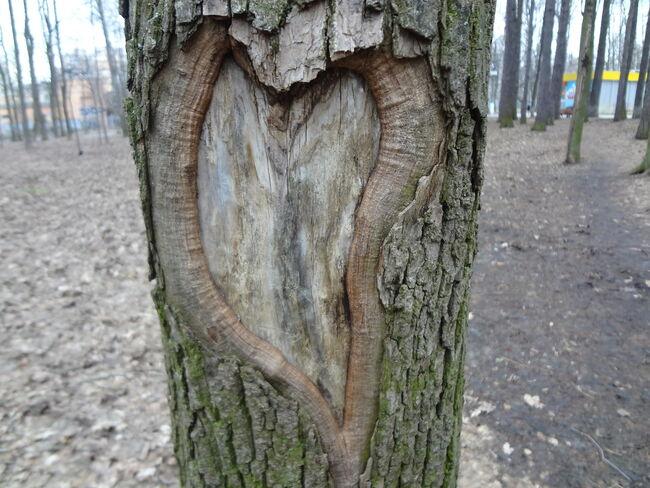 Bilde av hjerte i trestamme