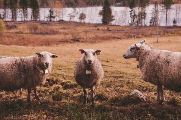 Foto: Kajsa Selnes