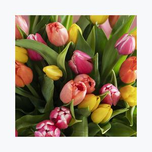910056_blomster_tulipaner