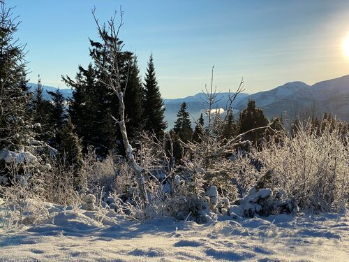 Sol og snø på trea.