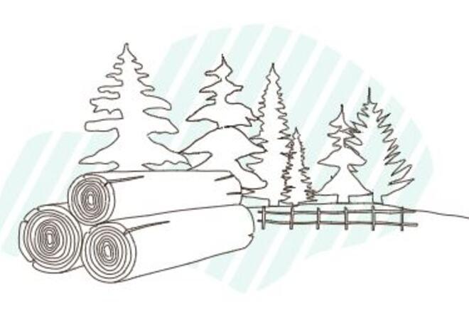 Illustrasjon Skogfond