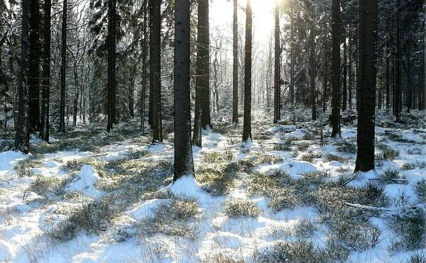 winter-forest-354248__480
