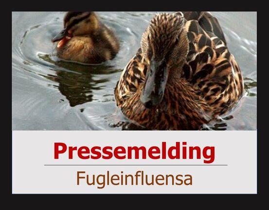 Pressemelding om fugleinfluensa