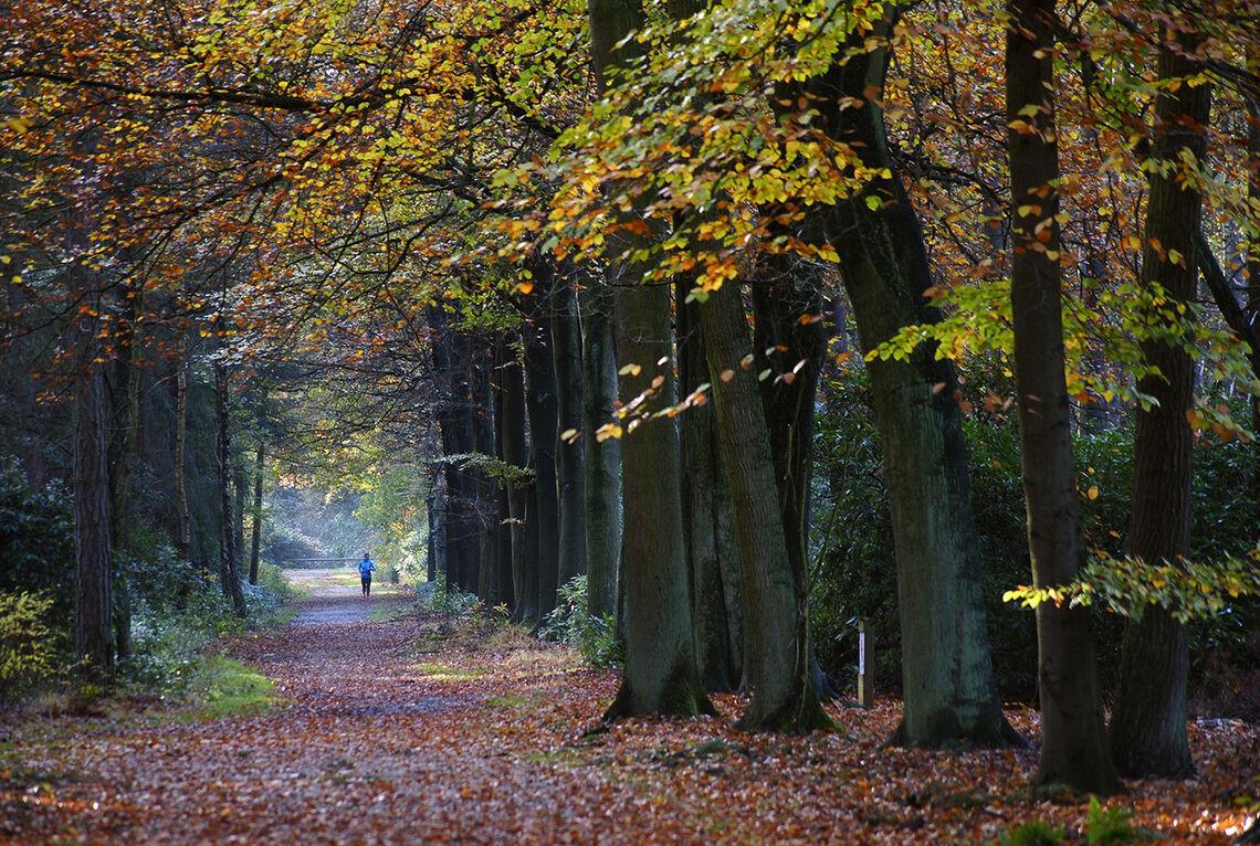 Tankene kan lett begynne å vandre mens man selv er ute og løper. (Foto: Erik Tanghe, Pixabay)
