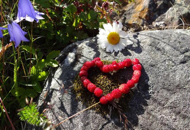 Hjerte av jordbær