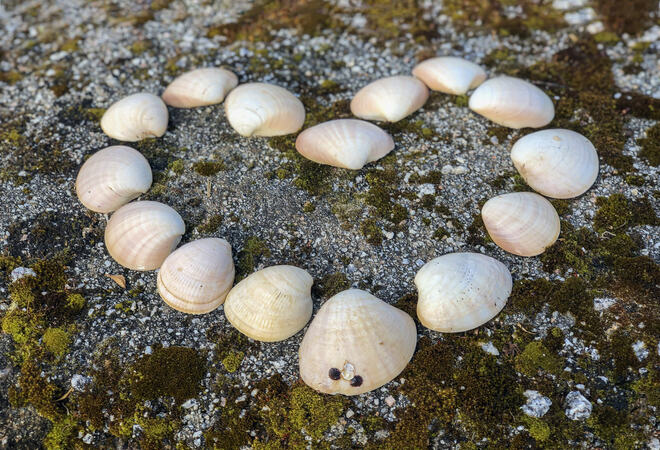 Heart shape from marine shells on natural ground. Romantic symbol. Romance love and Valentine concept, top view