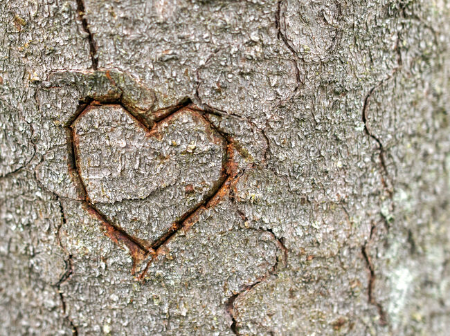 Heart shape on tree trunk in nature.