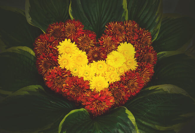 natural flower heart, made of Astra, paeony and corn flowers