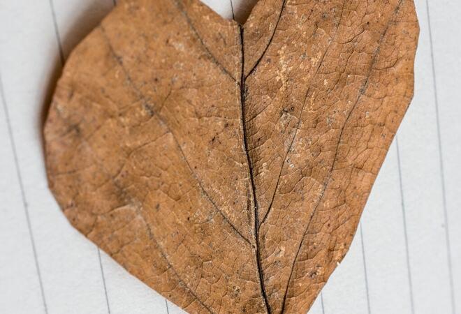 Heart shaped cut leaf on paper